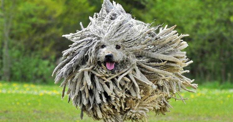 «Уменя собаки закончились»: кейс понастройке таргетированной рекламы во«ВКонтакте»