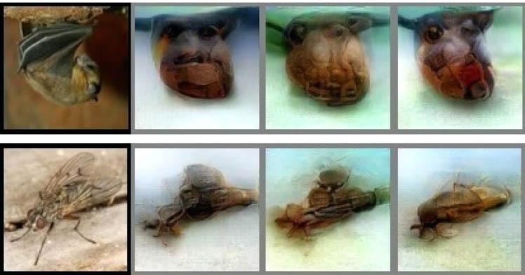 Декодируемые нейросетью снимки