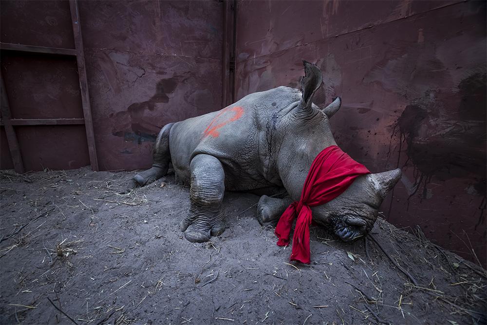 Фотографиями года становятся работы зачастую показывающие конфликты и плохие новости